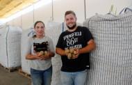Empresa sediada em Alpiarça doa 15 toneladas de batatas