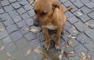 Cães envenenados em Alpiarça